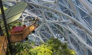 Amazon xây 'rừng nhiệt đới' giữa trung tâm thành phố Mỹ