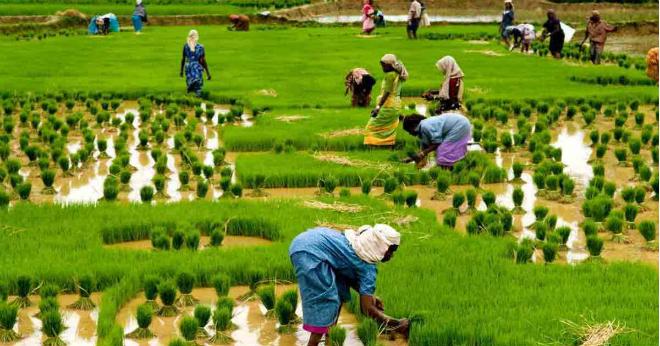Nông dân được tư vấn bệnh trên cây qua ảnh chụp, cách chăm sóc nông sản theo đặc điểm vùng và giống cây trồng cho nông dân&
