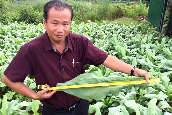 Ông Đỗ Thanh Phương bên vùng nguyên liệu bồ công anh. Ảnh: NVCC.
