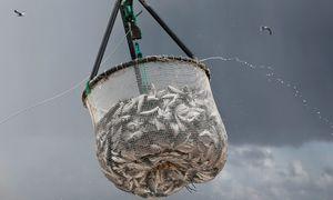 Các quỹ đầu tư Mỹ đẩy mạnh rót vốn vào startup công nghệ thủy sản