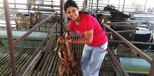 Shweta nhận ra niềm yêu thích đặc biệt với các chú dê.