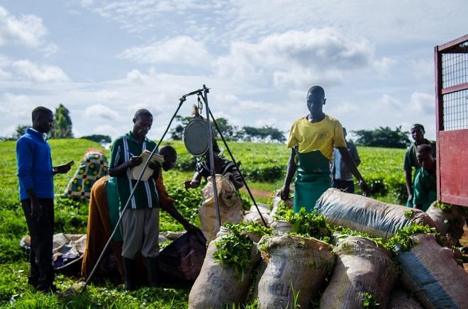 Nền nông nghiệp ở các quốc gia đang phát triển thuộc châu Á và châu Phi hiện đối mặt với nhiều thách thức từ các khâu trung gian, thanh toán, quản lý rủi ro và tài trợ thương mại. Ảnh: Binkabi