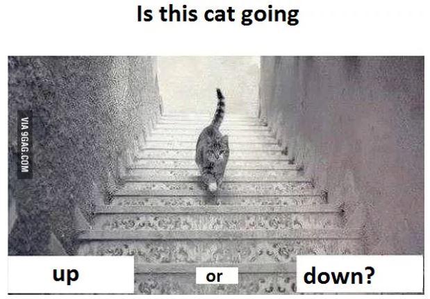 Một trong những bức ảnh nổi tiếng nhất trên 9GAG thu hút đông đảo người dùng vào tranh luận về việc con mèo đang đi xuống hay đi lên. Ảnh: 9GAG