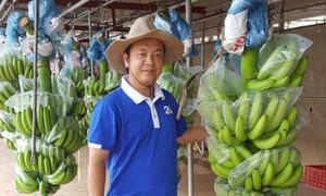 9 năm theo đuổi nông nghiệp sạch của CEO 8x