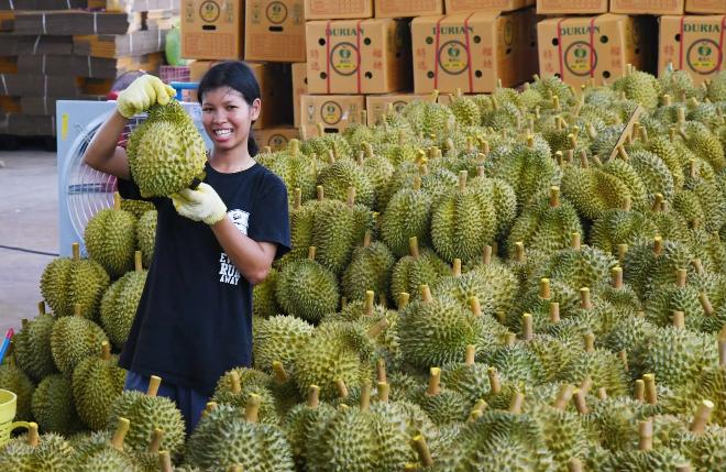 Thương mại điện tử giúp gia tăng doanh số cho sầu riêng Thái Lan. Ảnh: Takashi Kawakami.