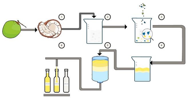 Quy trình công nghệ sản xuất dầu dừa hoạt hóa: tách cơm dừa - thu dịch sữa dừa - thủy phân dịch sữa dừa bằng enzyme - phân tách lớp dầu - lọc dầu dừa - chiết chai. Ảnh: Wealthdragon.vn