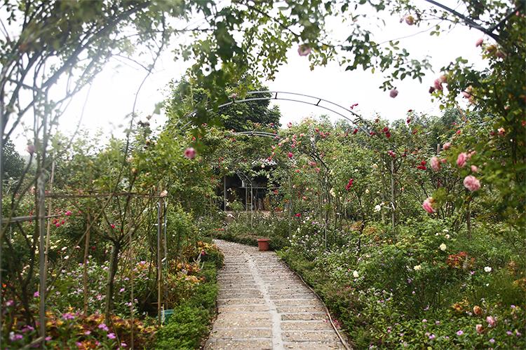 Khu vực vườn hồng được trang trí làm bối cảnh chụp ảnh. Ảnh: Gia Hoàng.