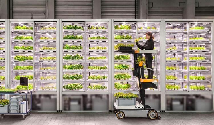 Doanh nghiệp áp dụng nhiều công nghệ hiện đại quản lý tất cả các quy trình để tạo nguồn thực phẩm bảo đảm chất lượng, hương vị. Ảnh: iFarm.