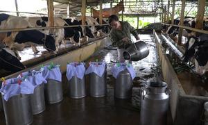 7x khởi nghiệp bằng mô hình nuôi bò sữa công nghệ cao