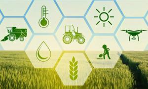 Chuỗi cung ứng nông nghiệp tìm giải pháp trong Covid-19