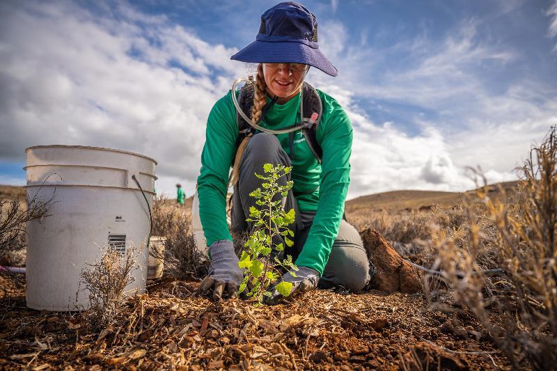 Một nhân viên đang trồng cây tại khu đồi trống. Ảnh: Terraformation.
